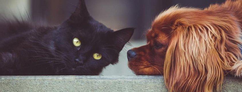 Perro y gato tienda animales productos mascotas