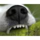 Cómo mantener buena higiene dental perro