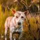 Sarna en perros. Dermatitis